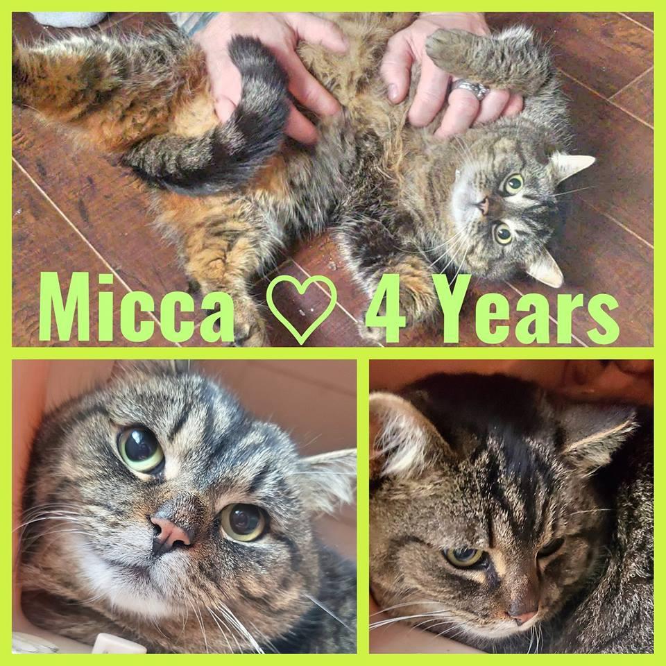 Micca- 6 Years- Female