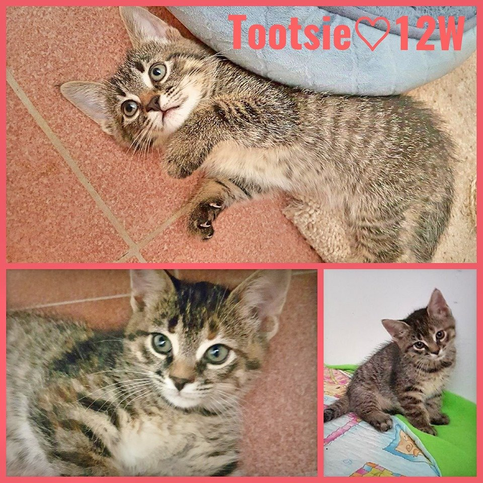 Tootsie-Female-22  Weeks