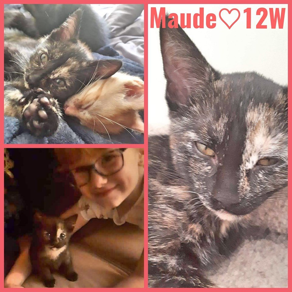 Maude-Female- 8 Months