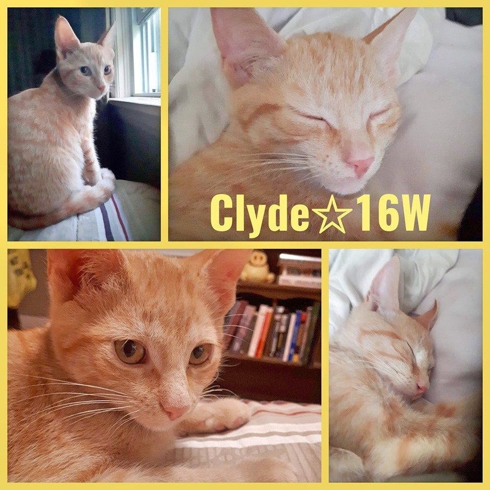 Clyde-Male- 21  Weeks