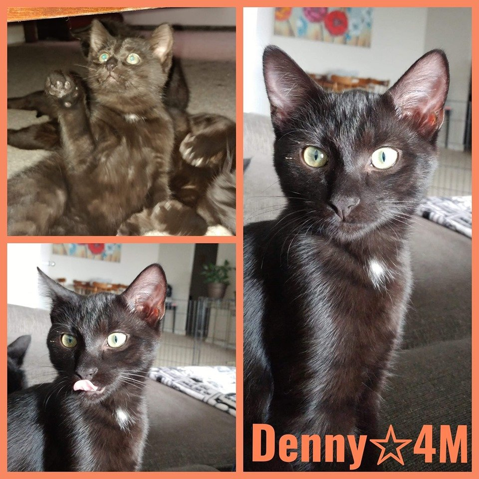 Denny-Male- 5 Months