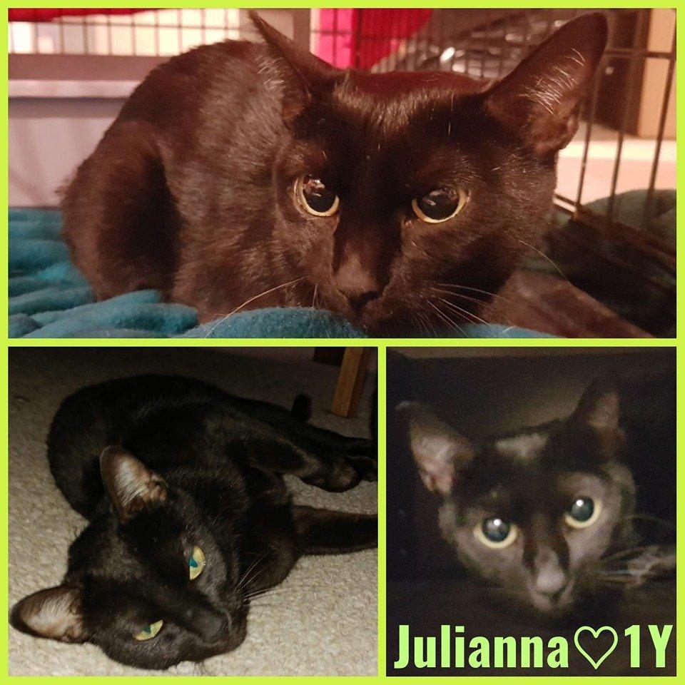 Julianna-Female- 1 Year