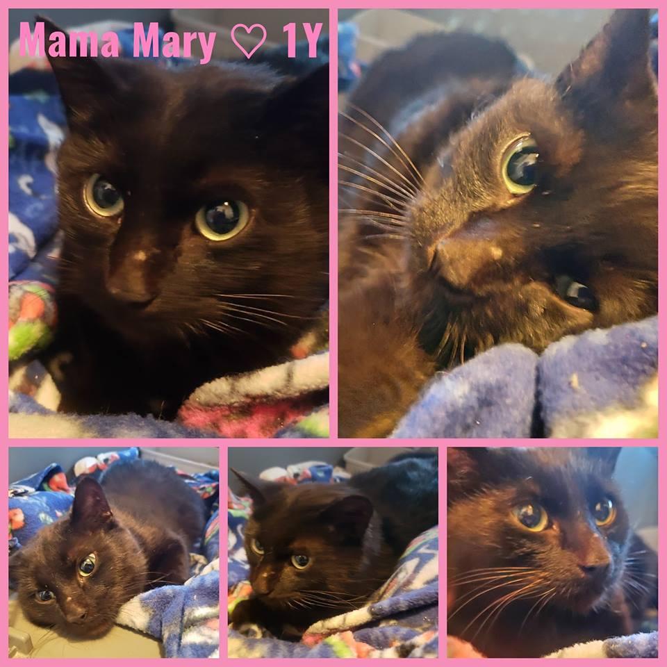 Mama Mary- Female – 1 Year