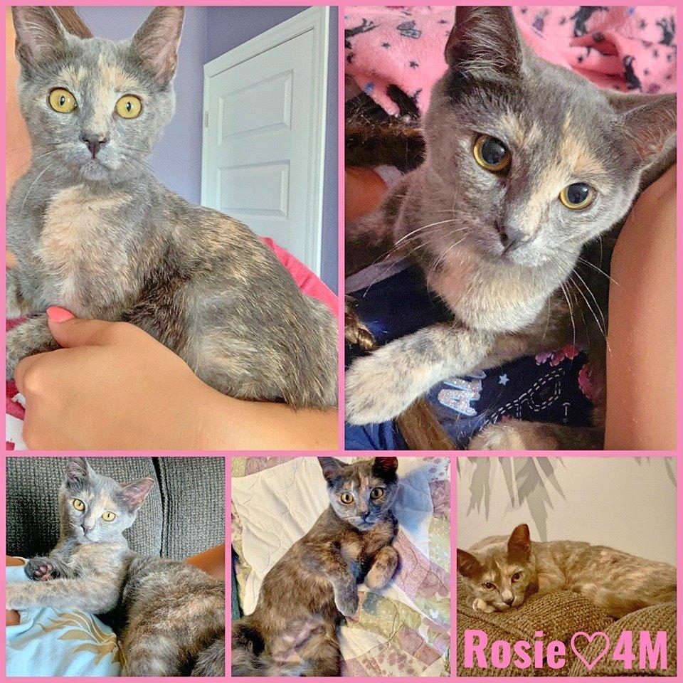 Rosie-Female- 6  Months