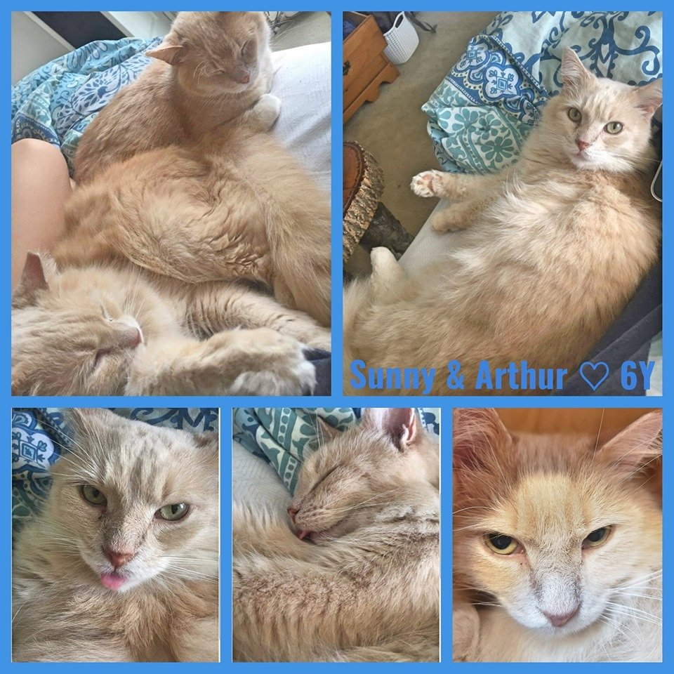 Sunny and Arthur-Male- 6 Years