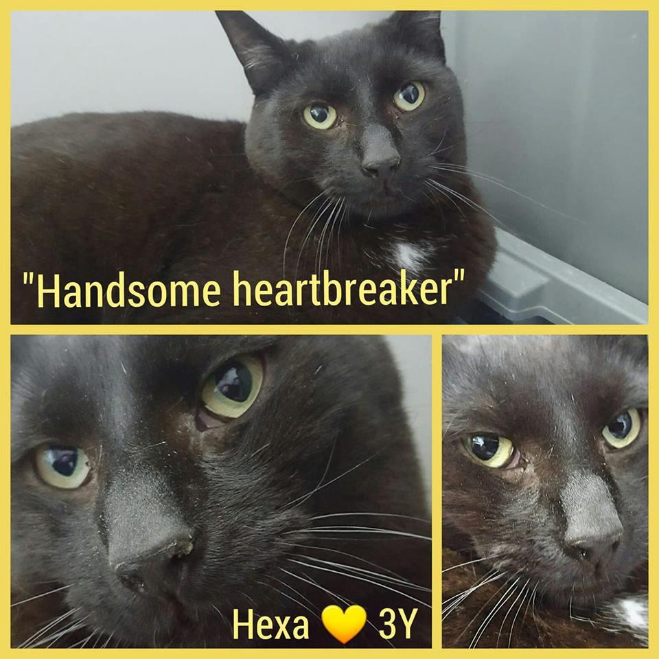 Hexa-Male- 3 Years