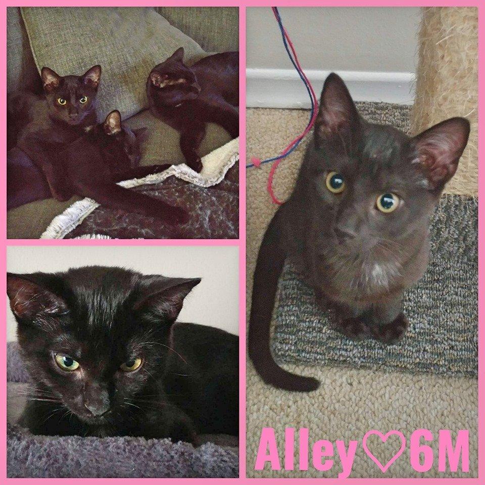 Alley-Female- 1 Year