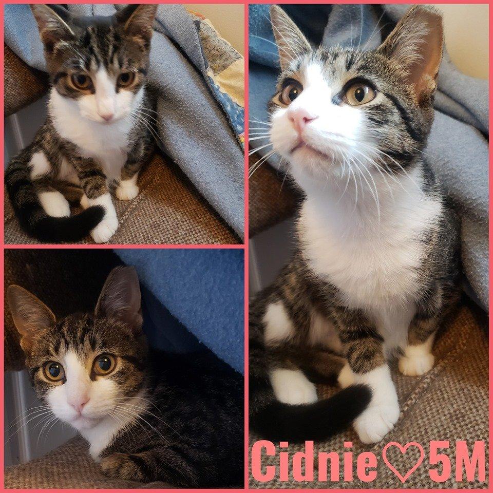 Cidnie- Female – 7 Months