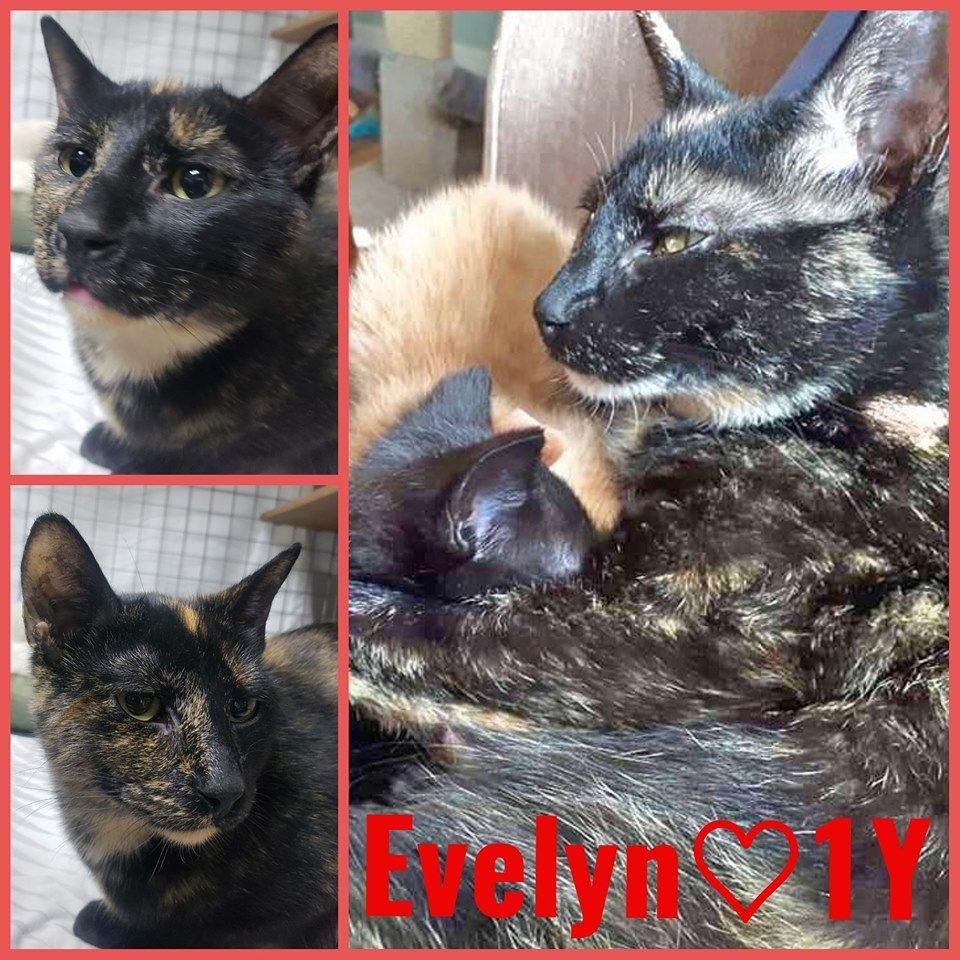 Evelyn-Female- 1 Year