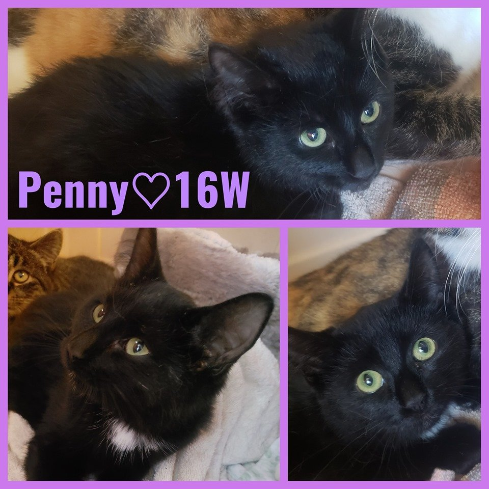 Penny-Female- 6 Months