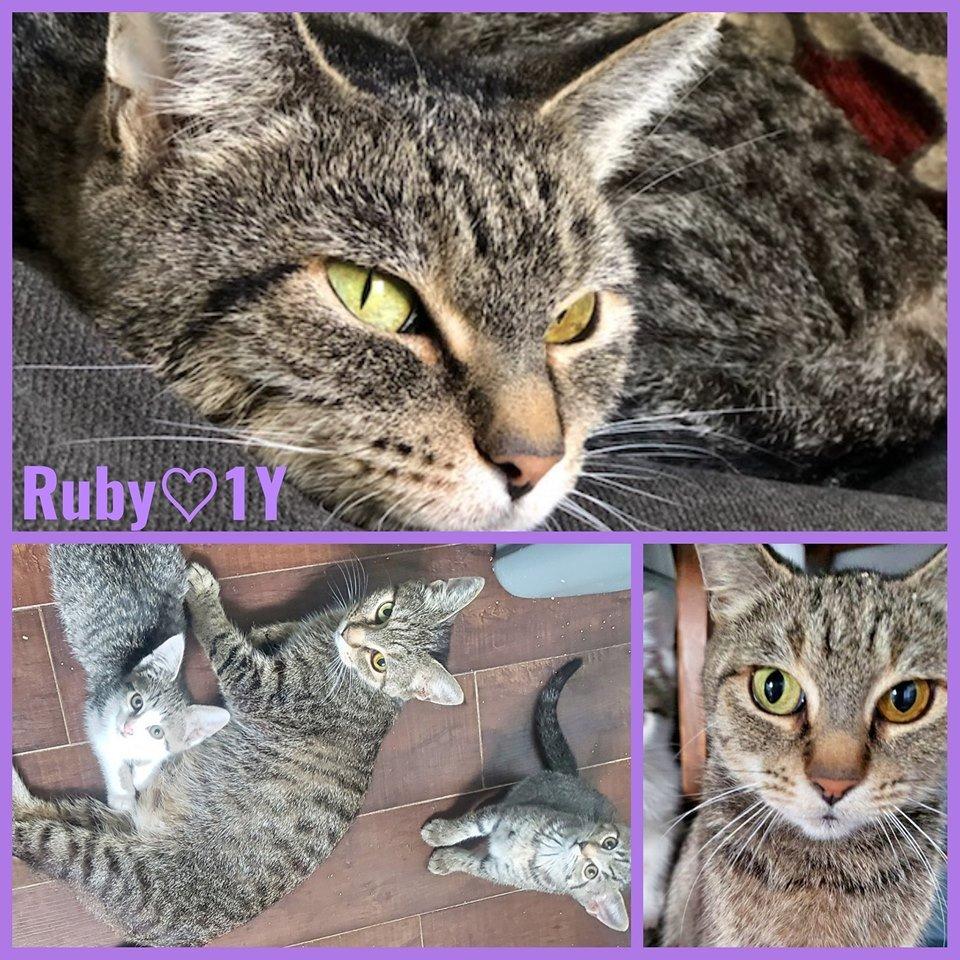 Ruby-Female- 1 Year