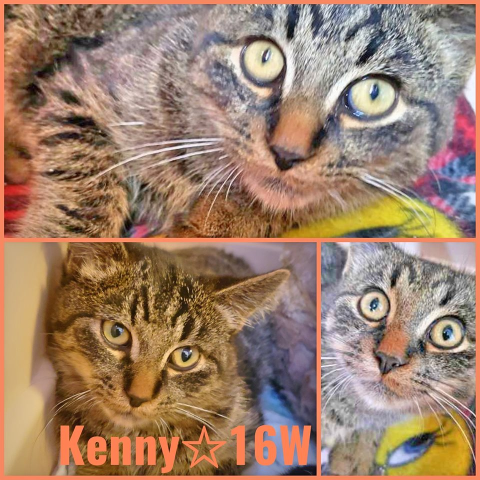 Kenny-Male- 10 Months