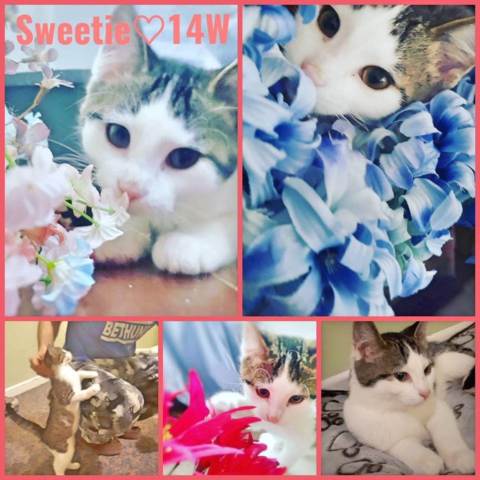 Sweetie-Female- 5 Months