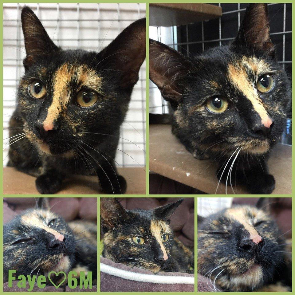 Faye-Female- 1 Year