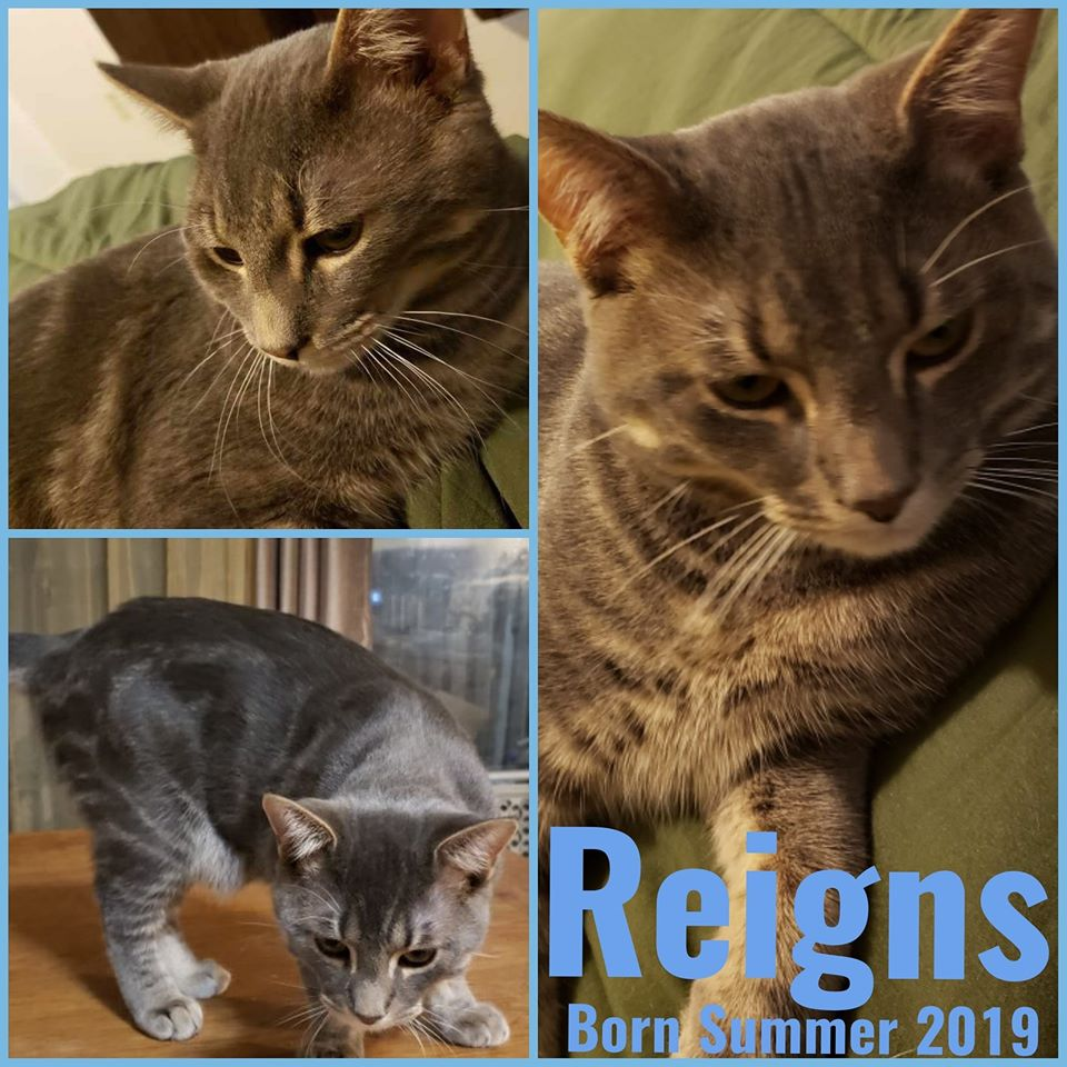 Reigns-Male- Born in Summer 2019
