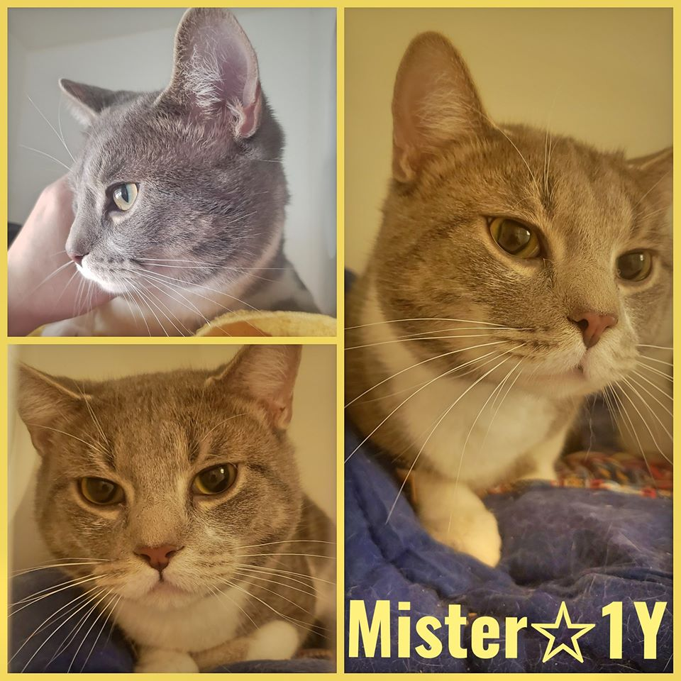 Mister-Male- 1 Year