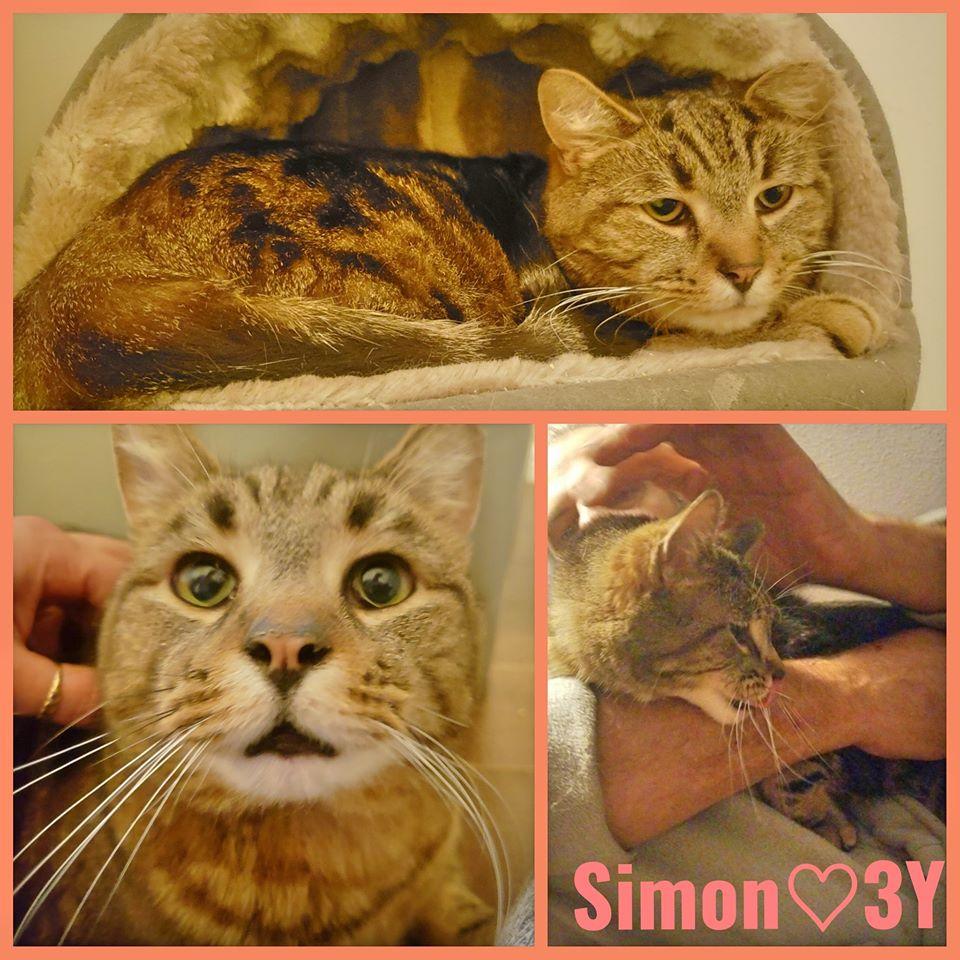 Simon-Male-3 Years