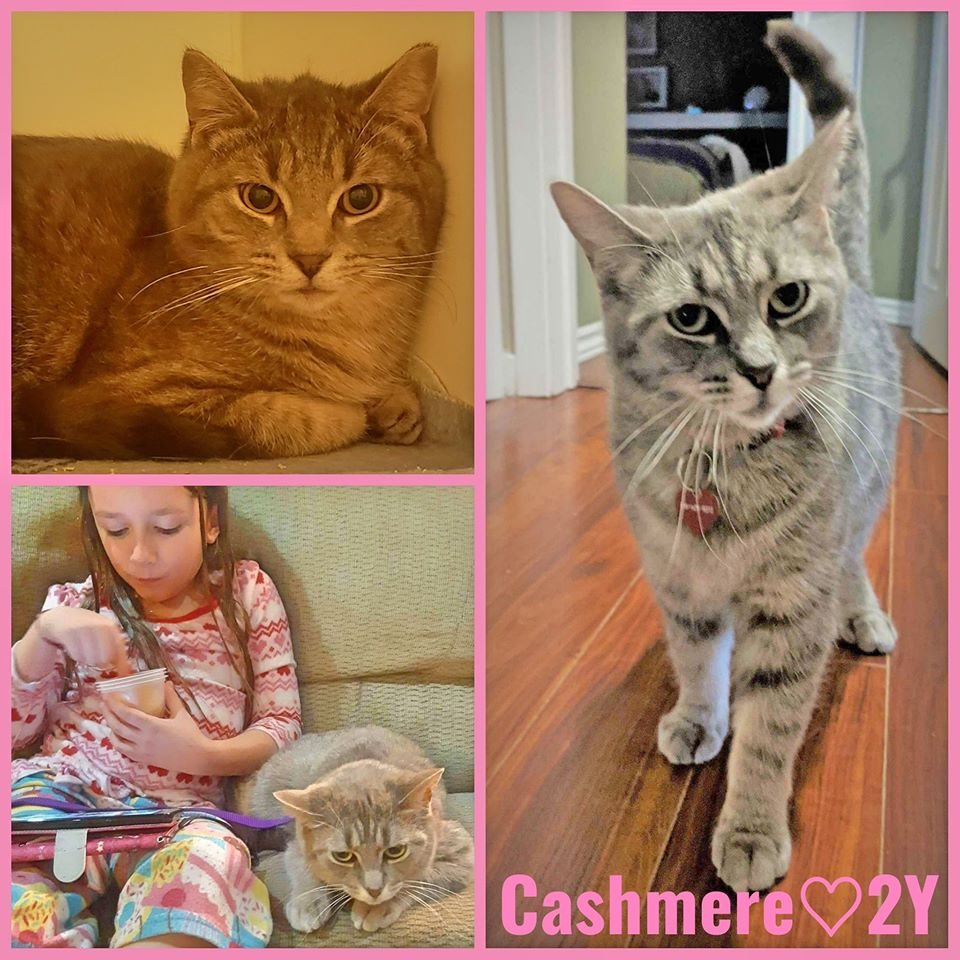 Cashmere- Female- 2 Years