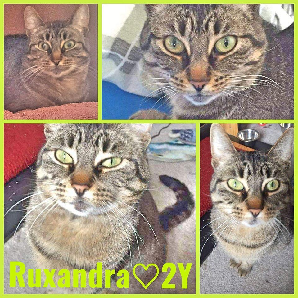 Ruxandra- Female- 2 Years