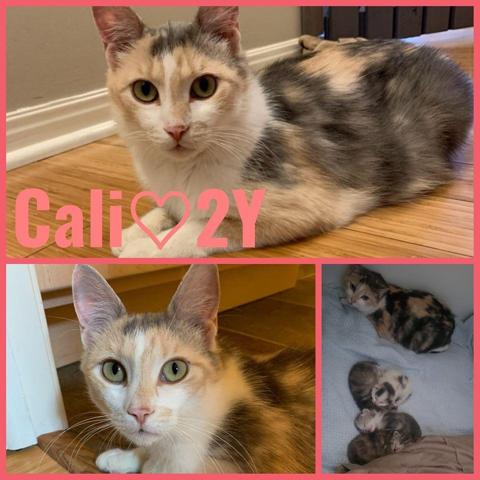 Cali-Female- 2 Years