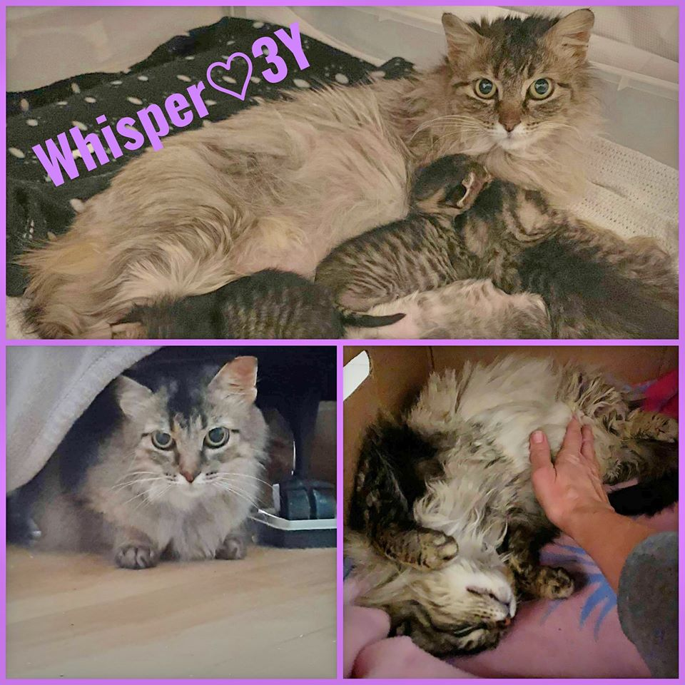 Whisper-Female- 3 Years