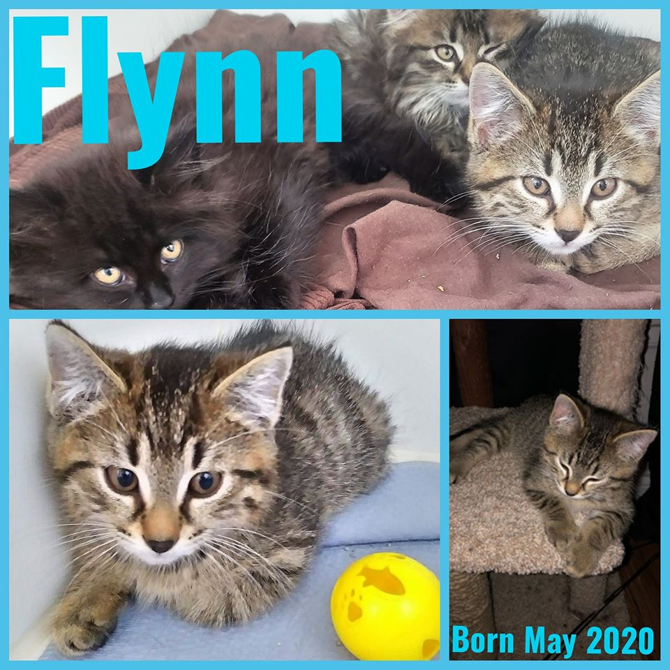 Flynn-Male-Born in May 2020