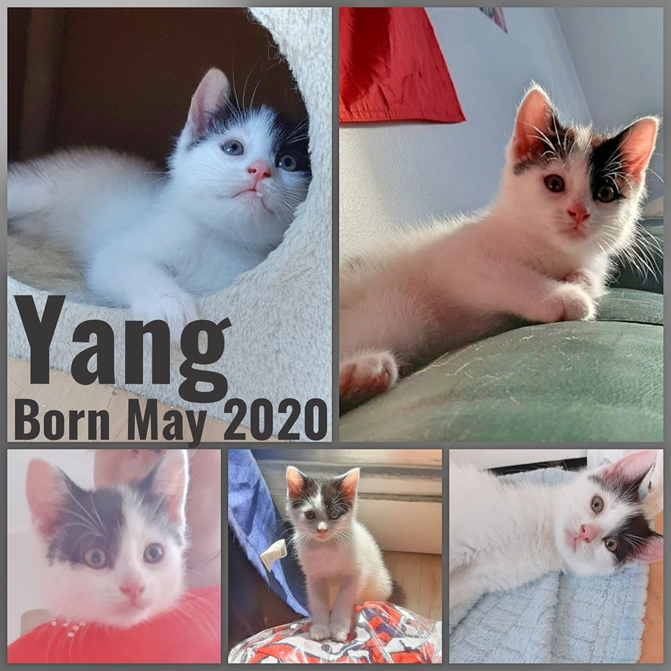 Yang-Male-Born in May 2020