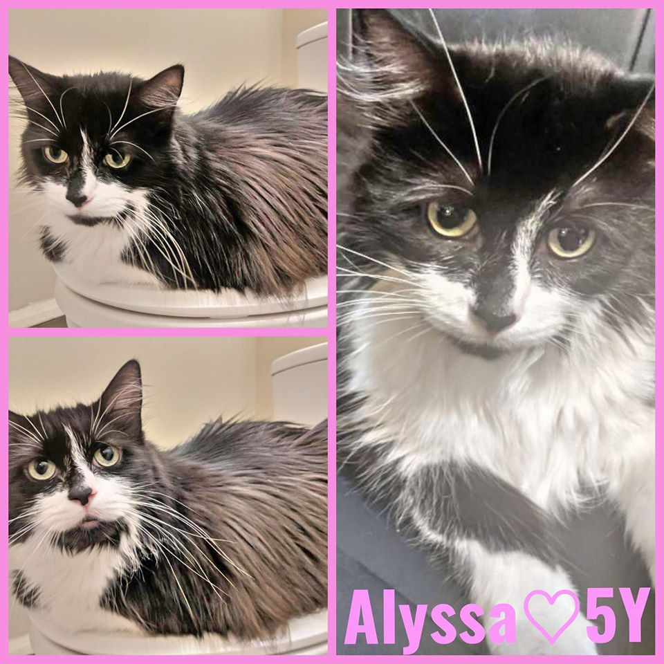Alyssa-Female- 5 Years