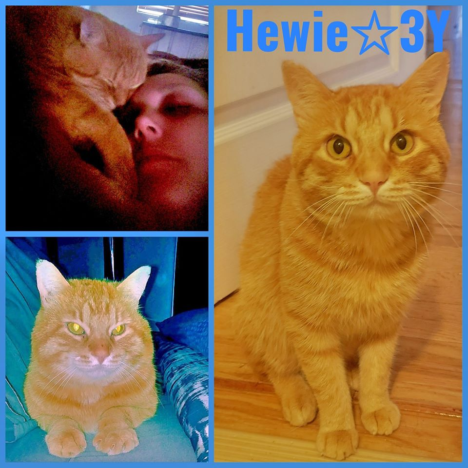 Hewie-Male- 3 Years