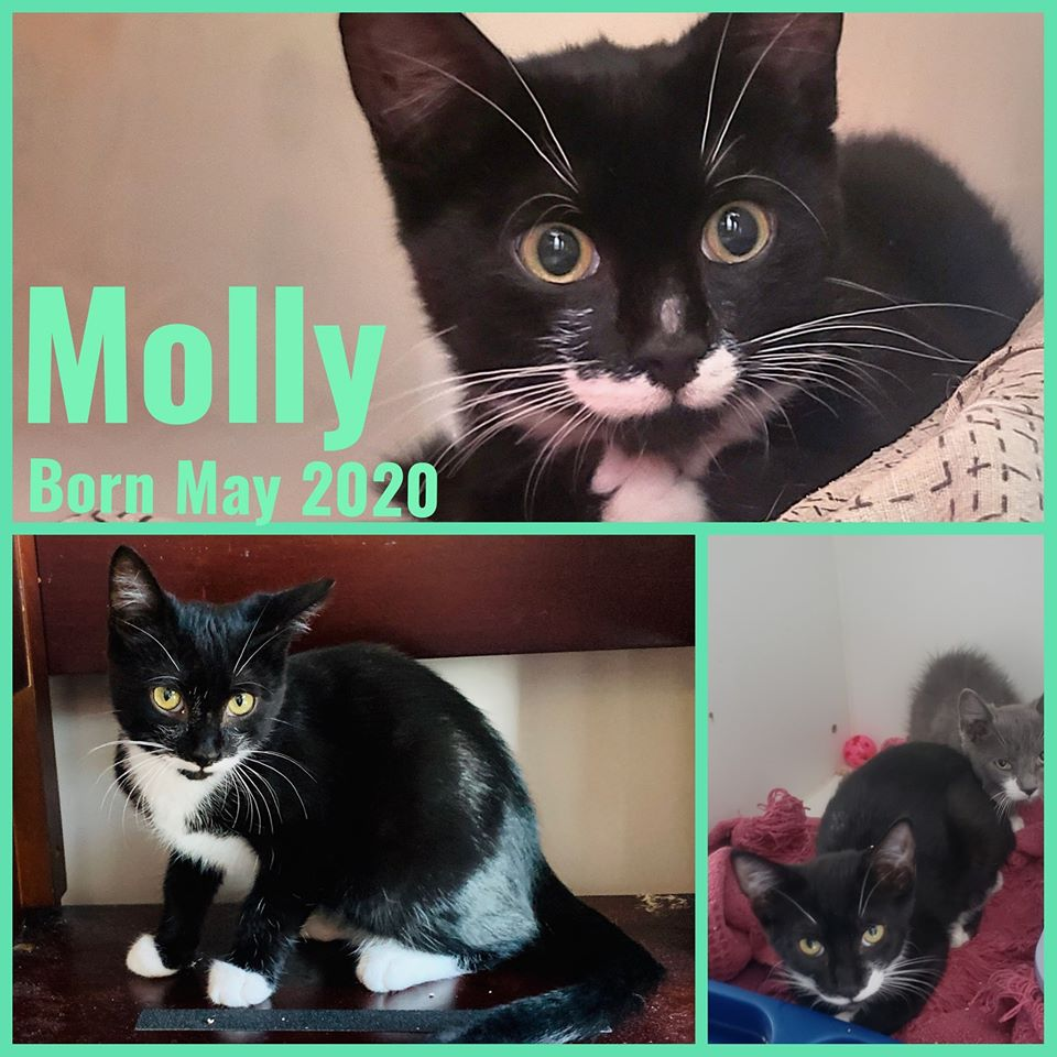 Molly-Female-Born in May 2020