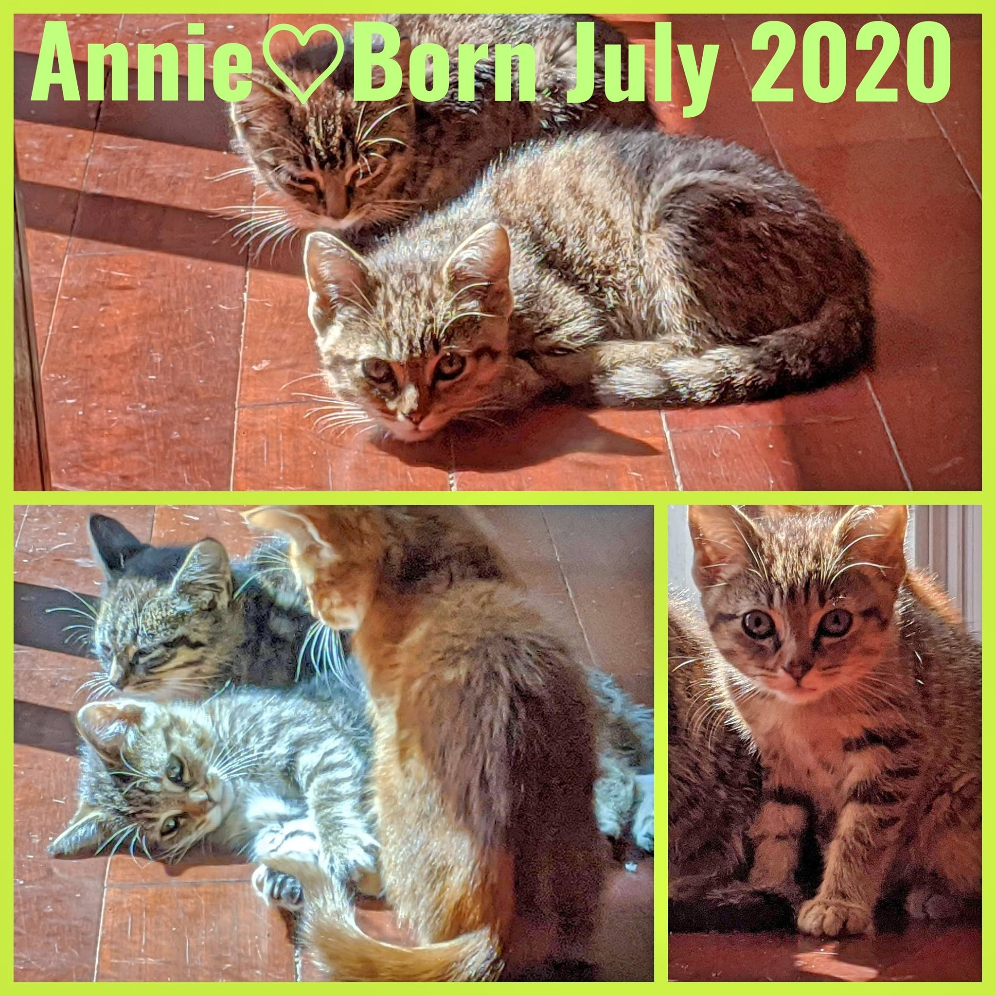 Annie-Female-Born in July 2020