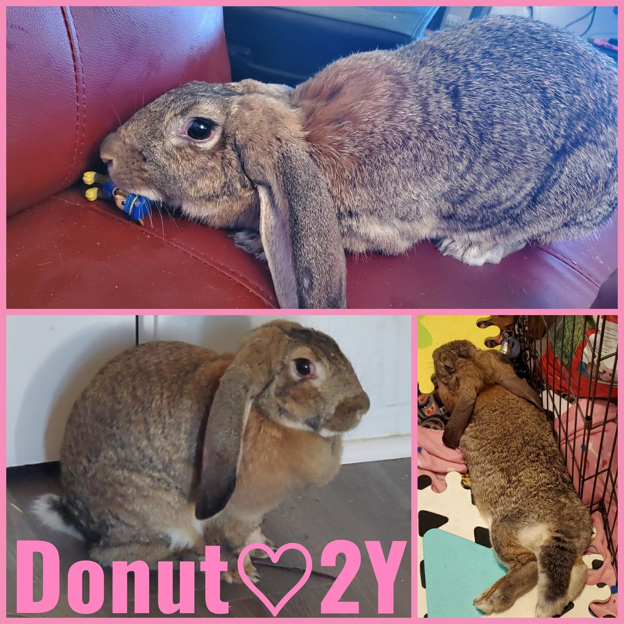 Donut-Female- 2 Years