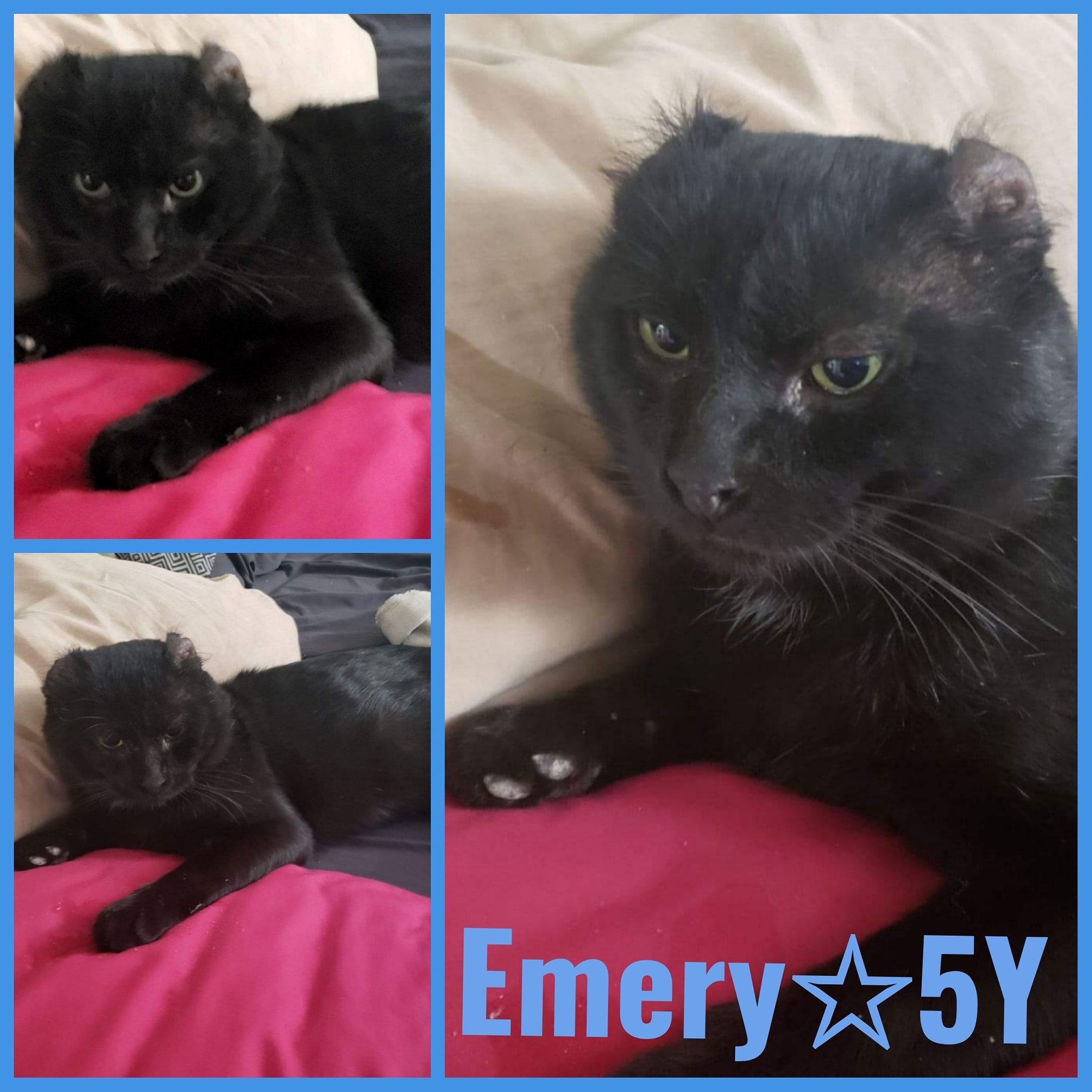 Emery-Male- 5 Years