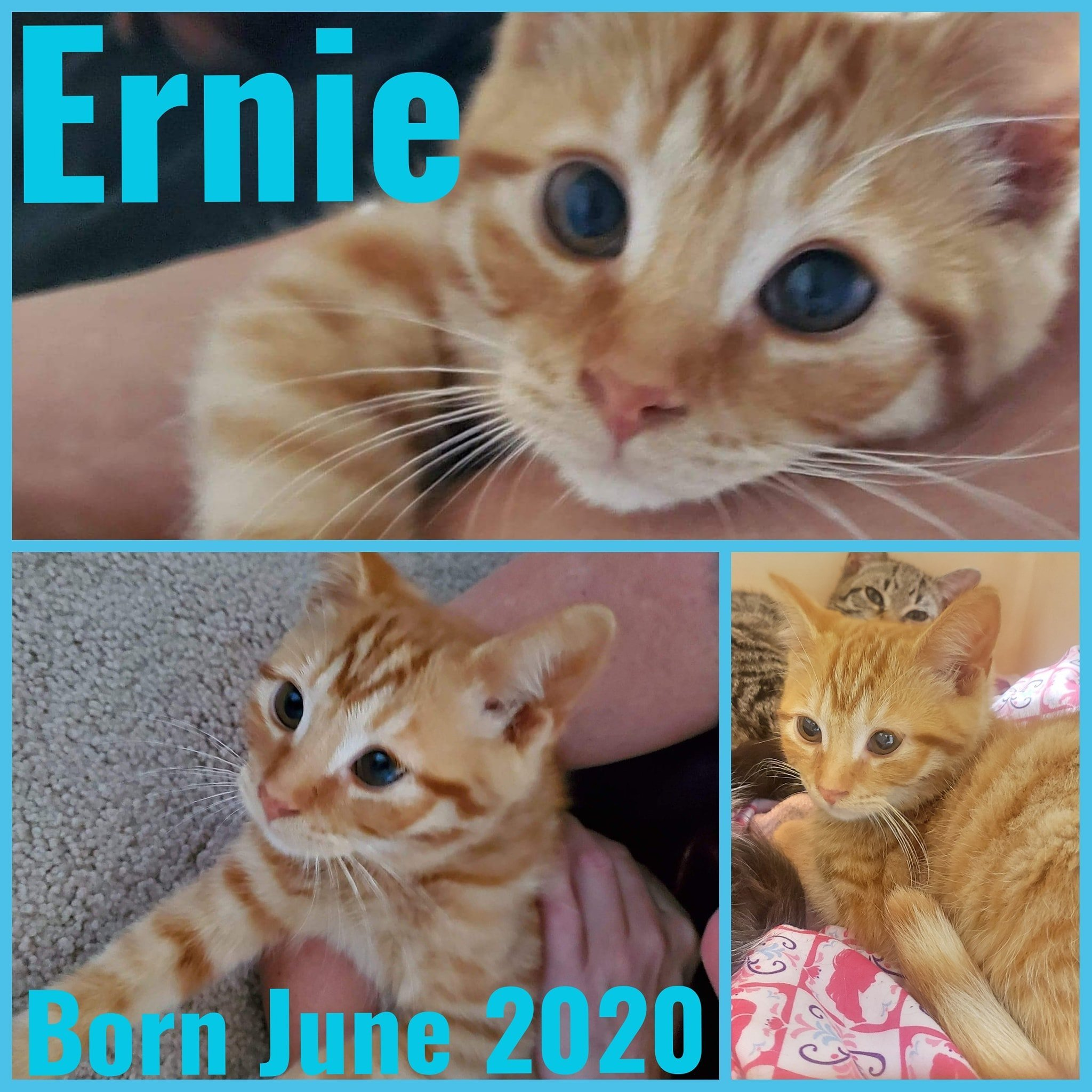 Ernie-Male-Born June 2020