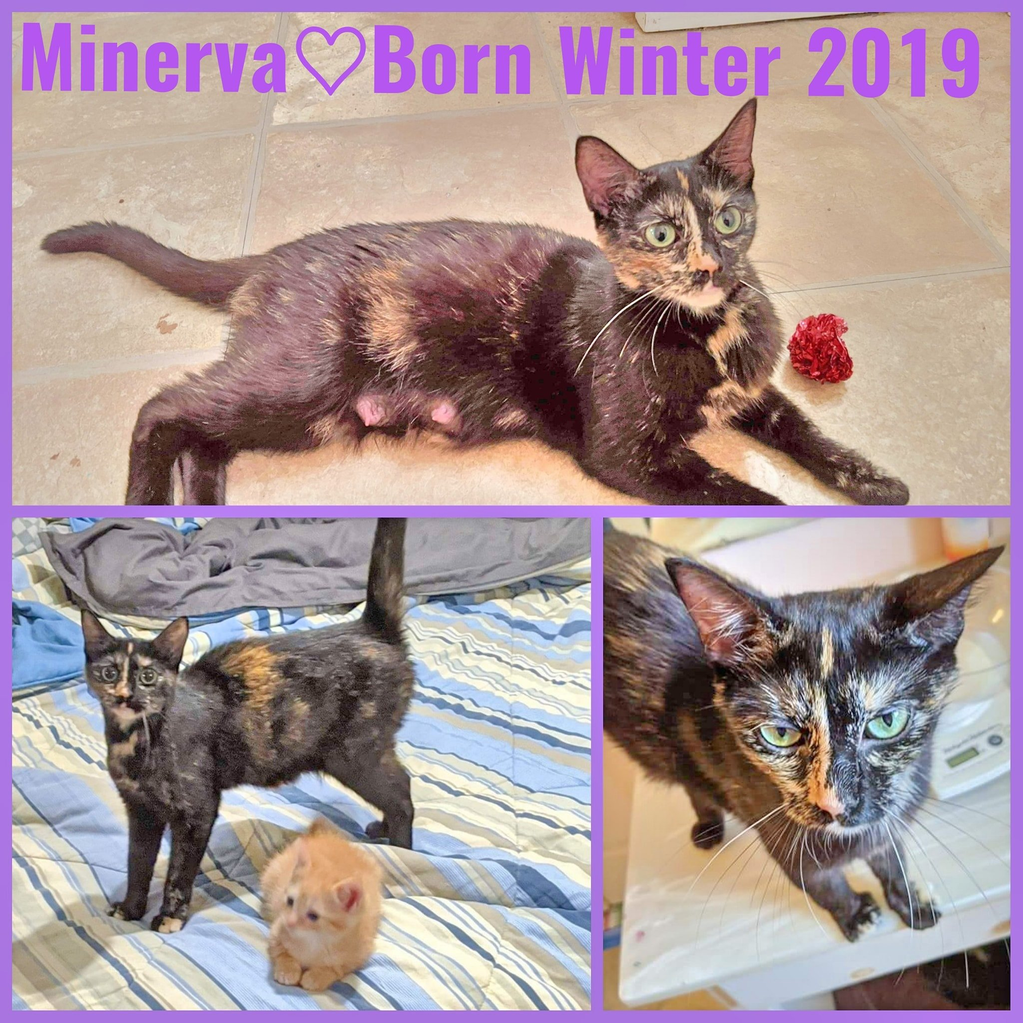 Minerva-Female-Born Winter 2019