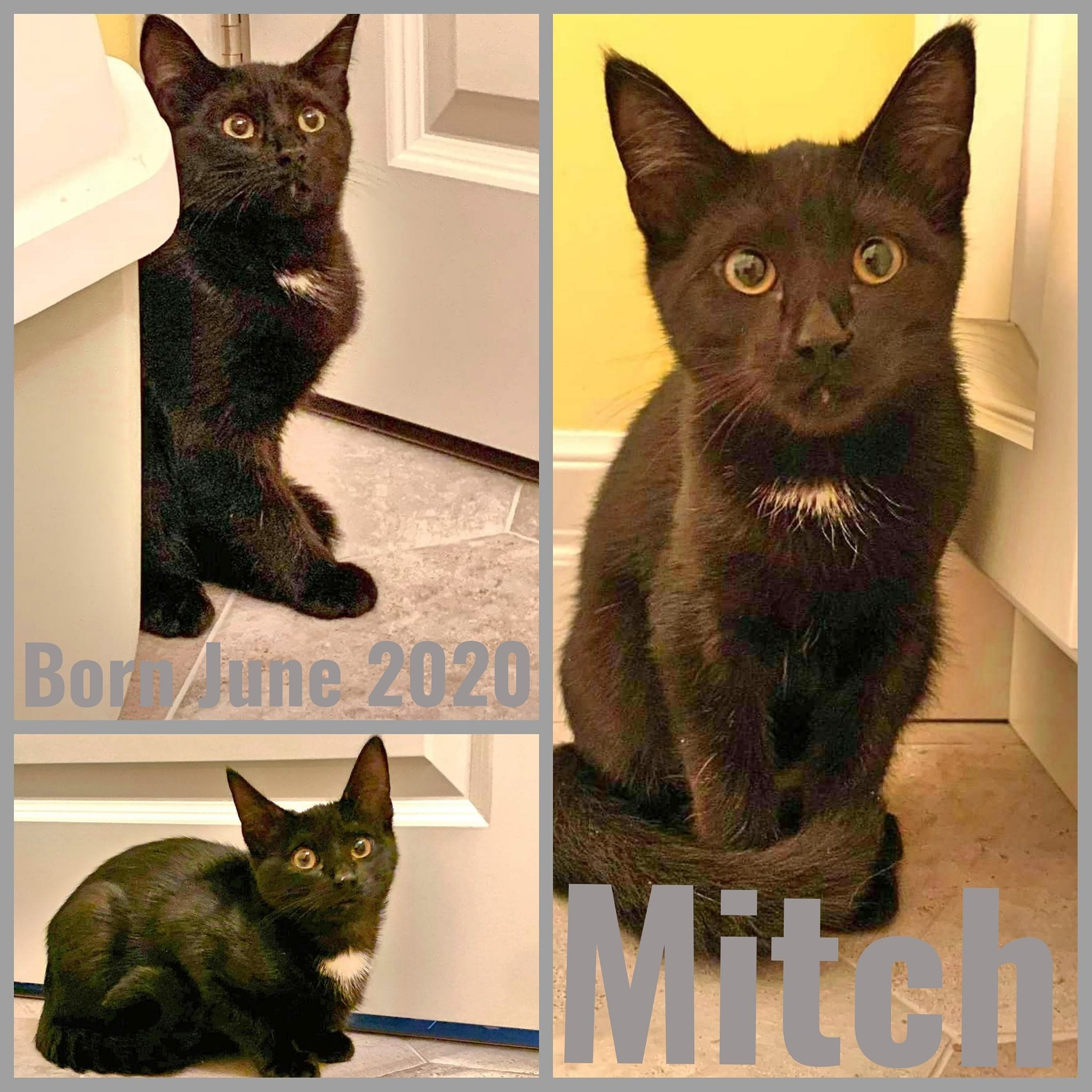 Mitch-Male-Born in June 2020
