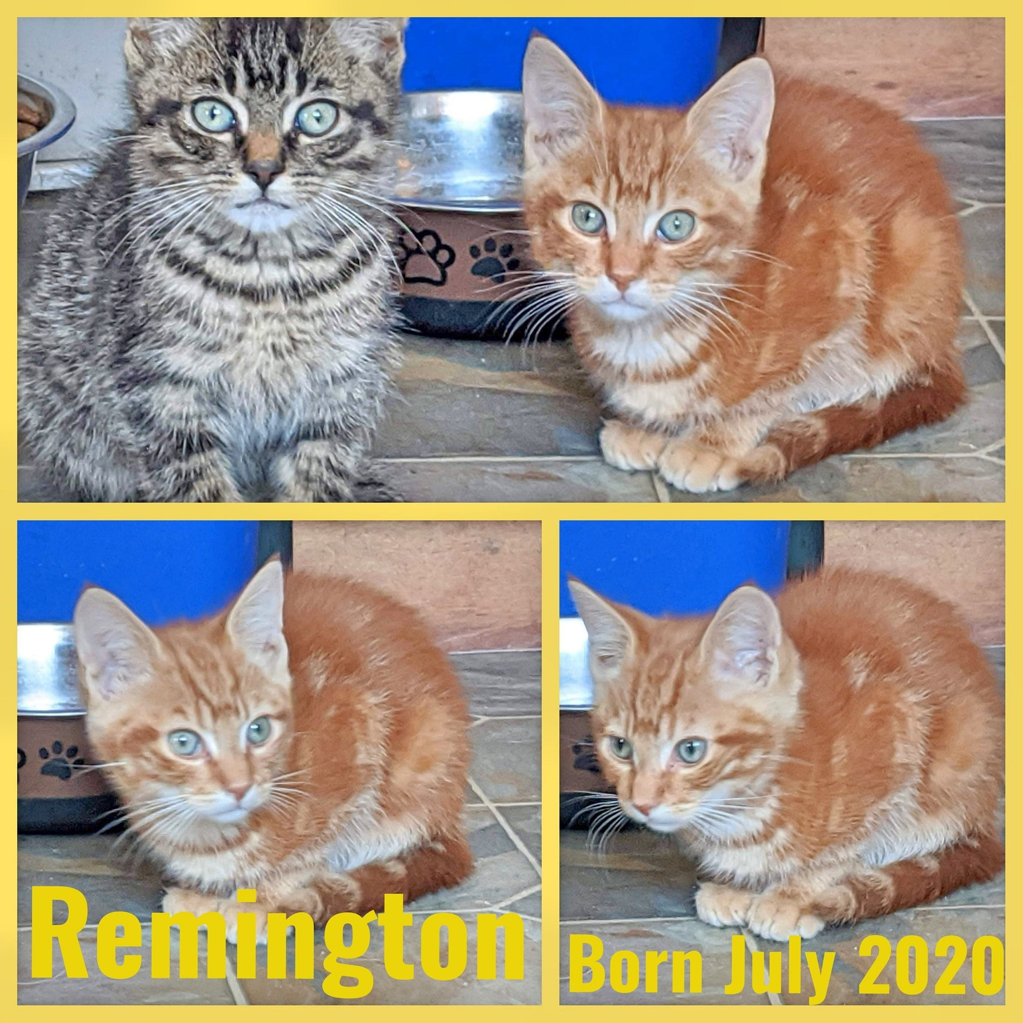 Remington-Male-Born in July 2020