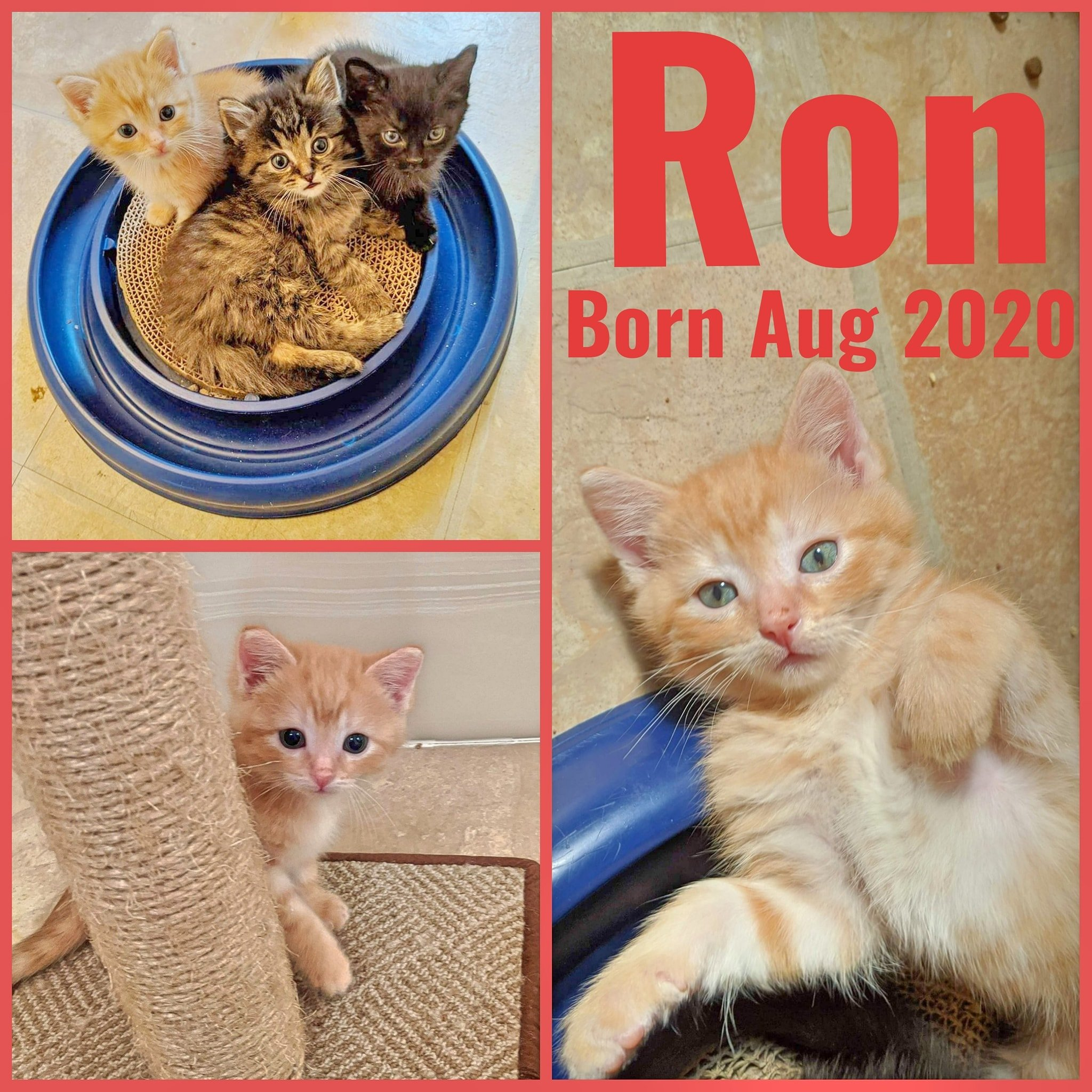 Ron-Male-Born August 2020