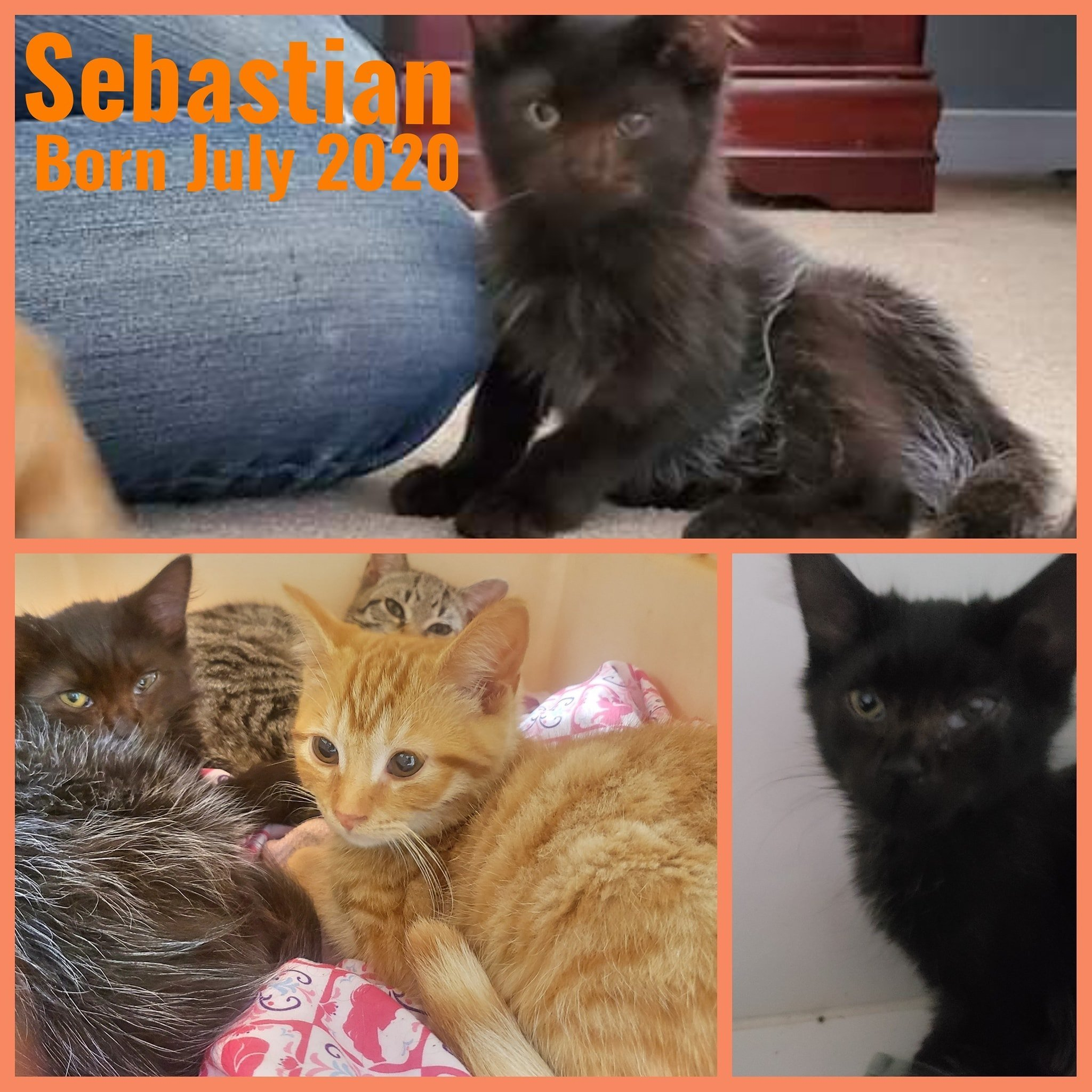 Sebastian-Male-July 2020