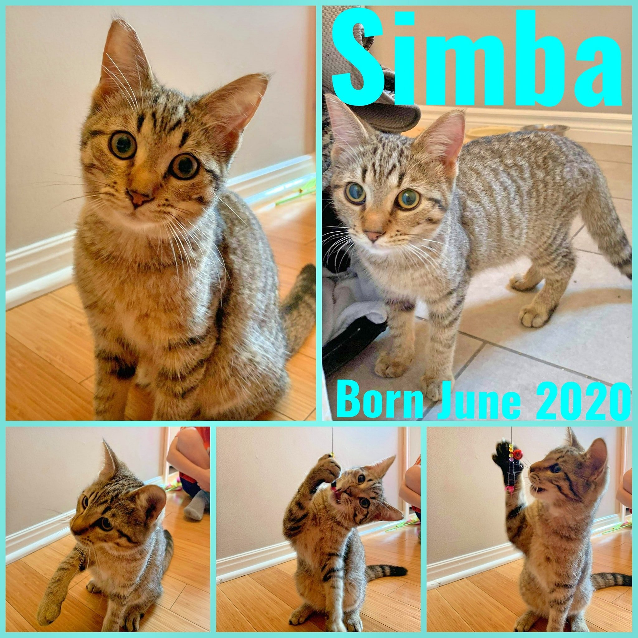 Simba-Male-Born in June 2020