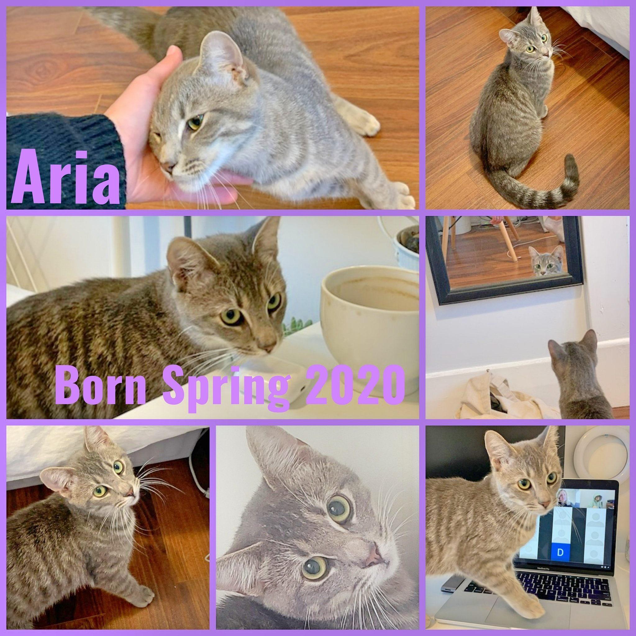 Aria-Female-Born in Spring 2020