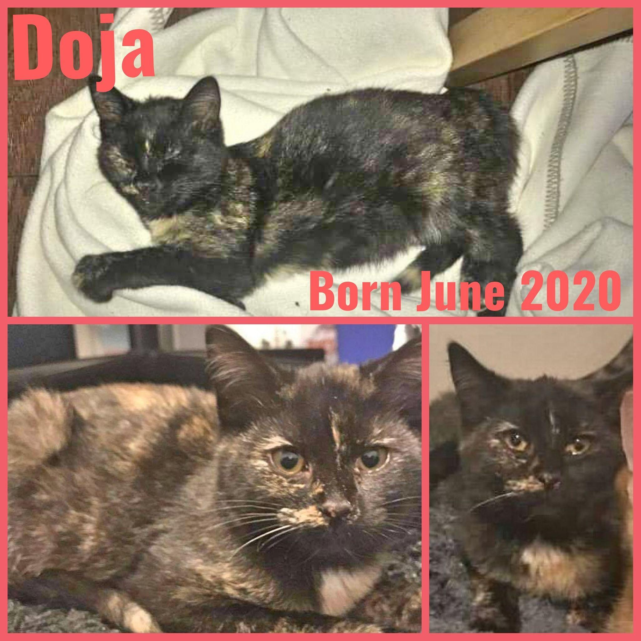 Doja-Female-Born in June 2020