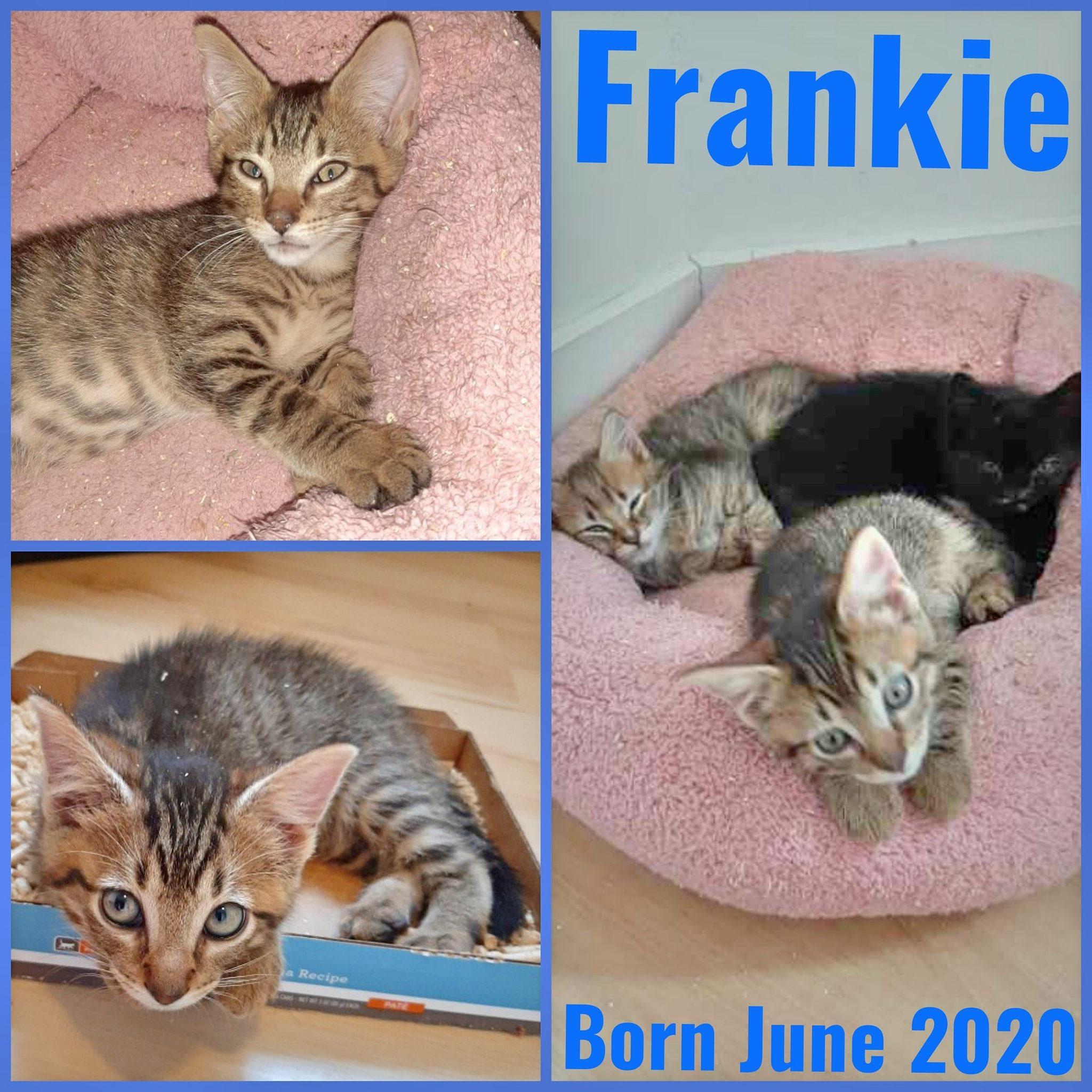 Frankie-Male-Born in June 2020