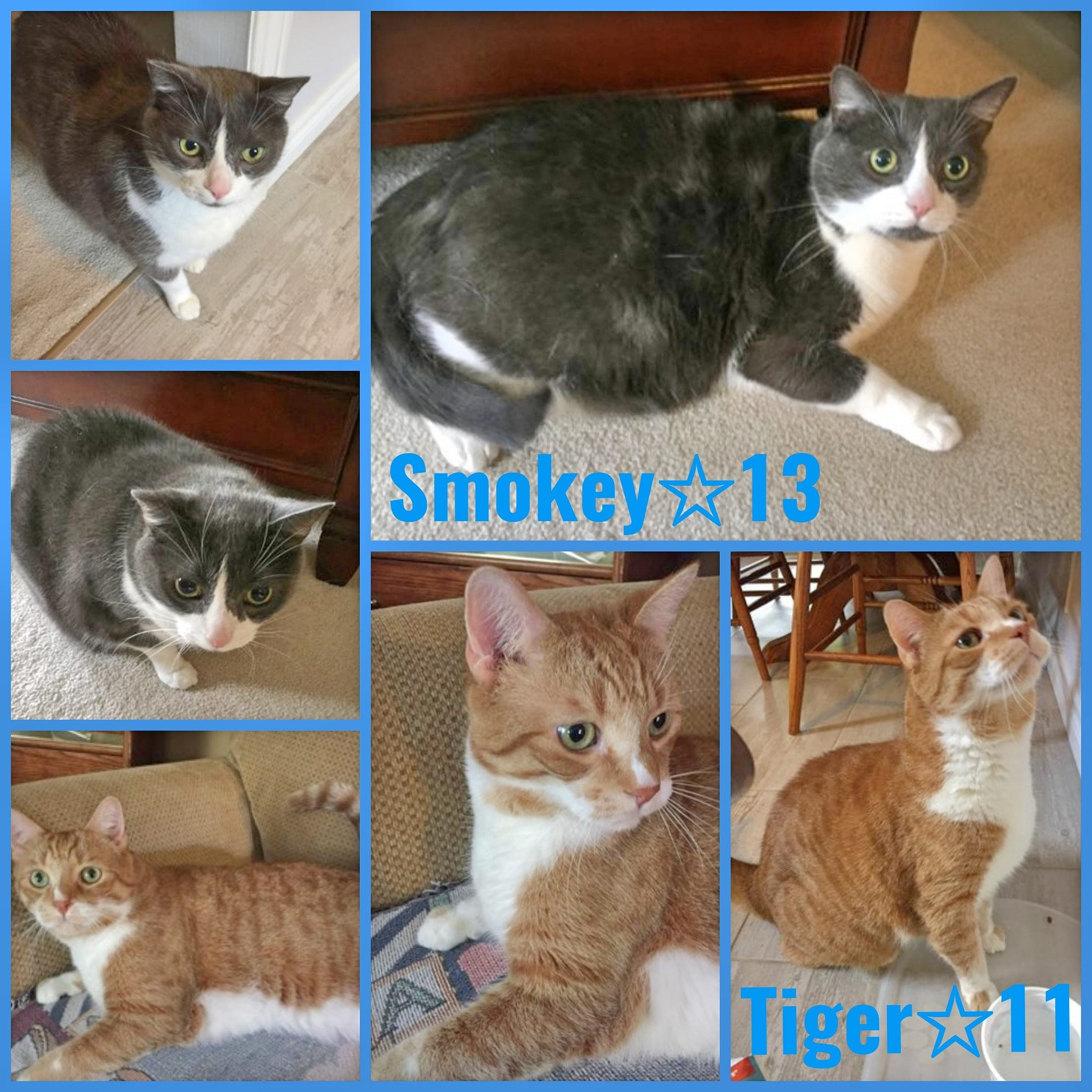 Smokey-Male-13 Years  Tiger-Male-11 Years
