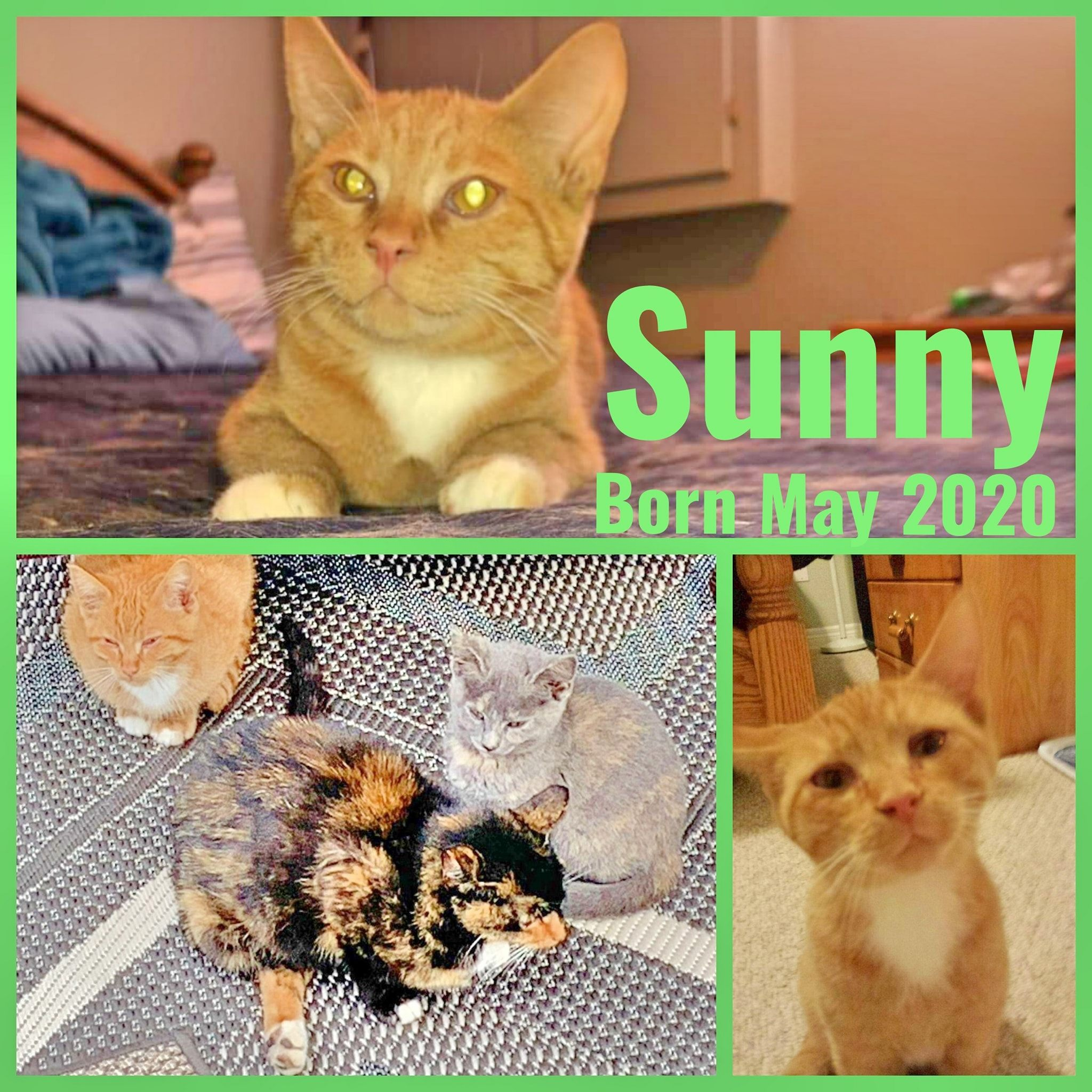 Sunny-Male-Born in May 2020