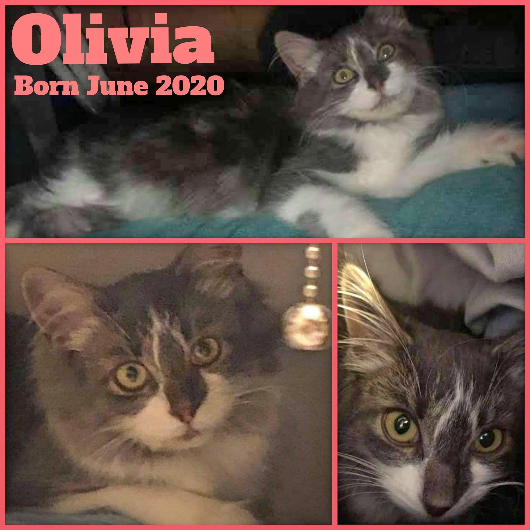 Olivia-Female-Born June 2020