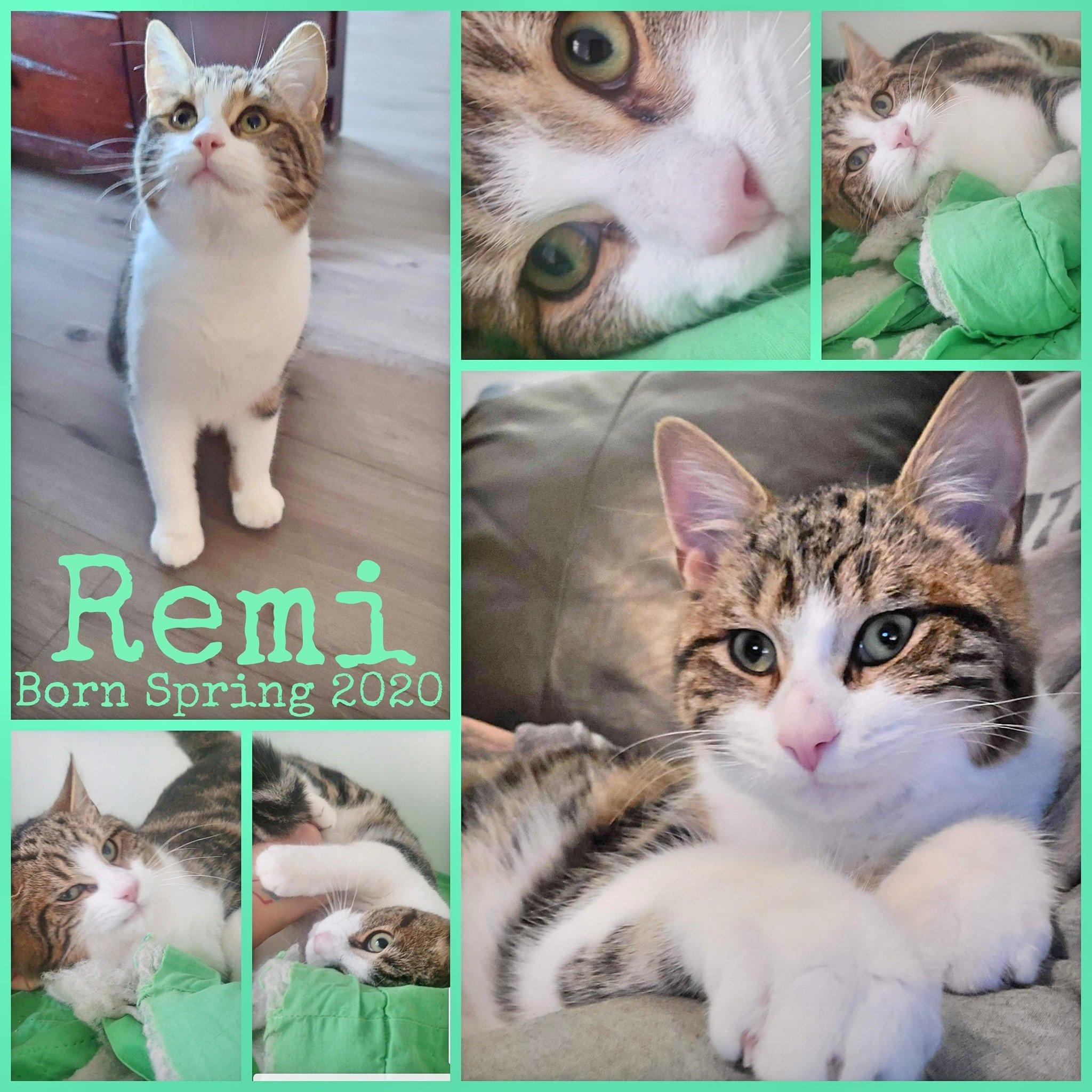Remi-Male-Born Spring 2020