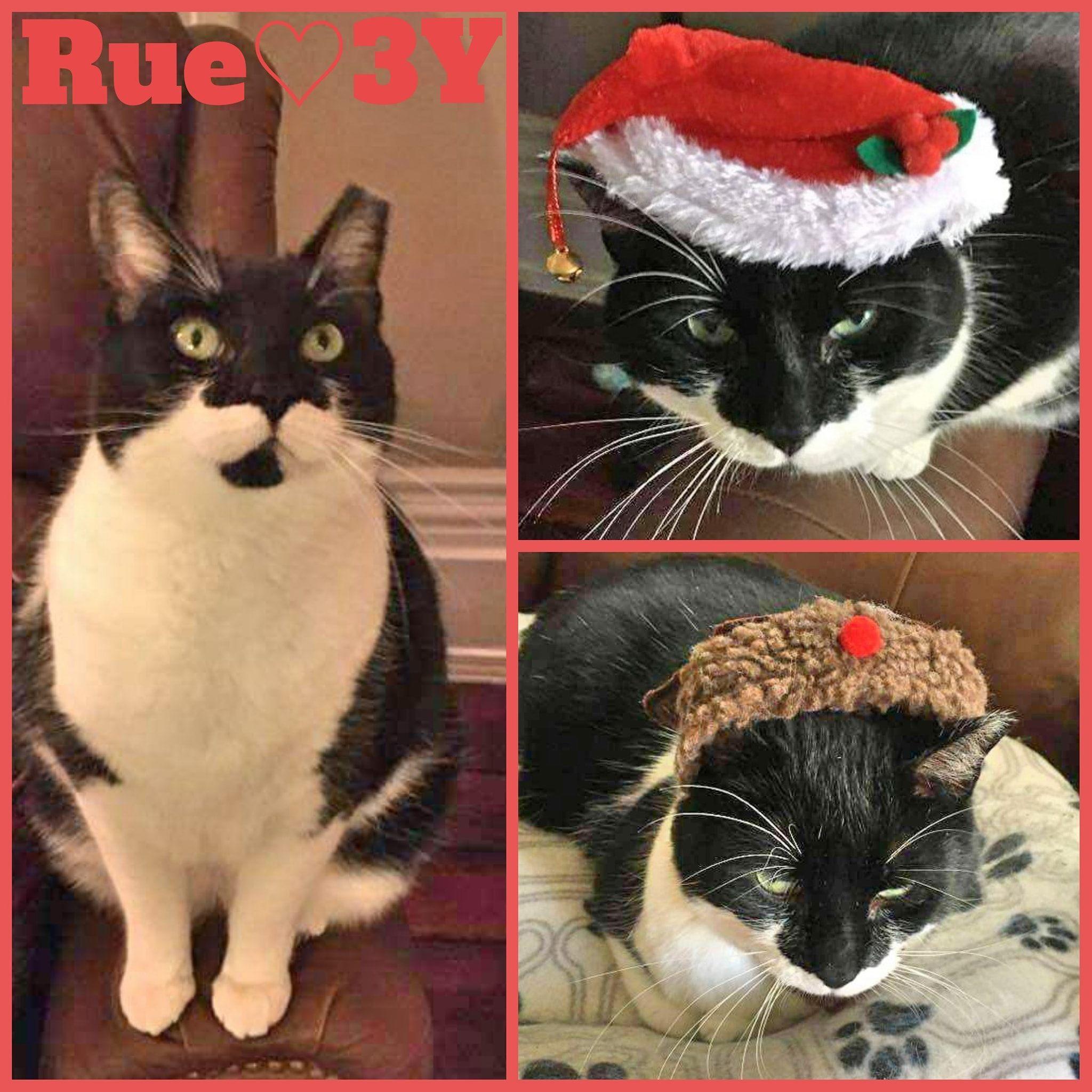 Rue-Female- 3 Years—Adoption Pending