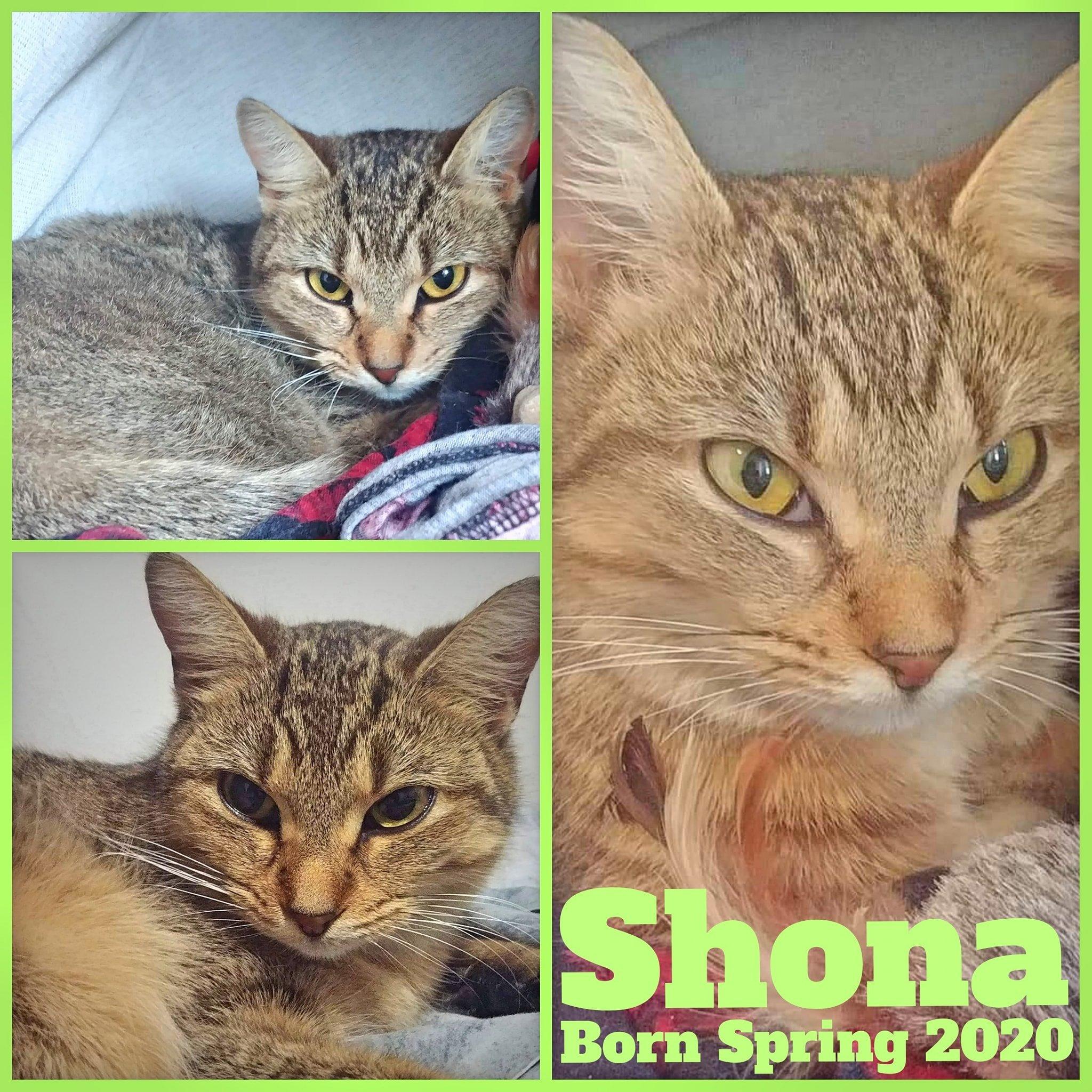 Shona-Female-Born in Spring 2020