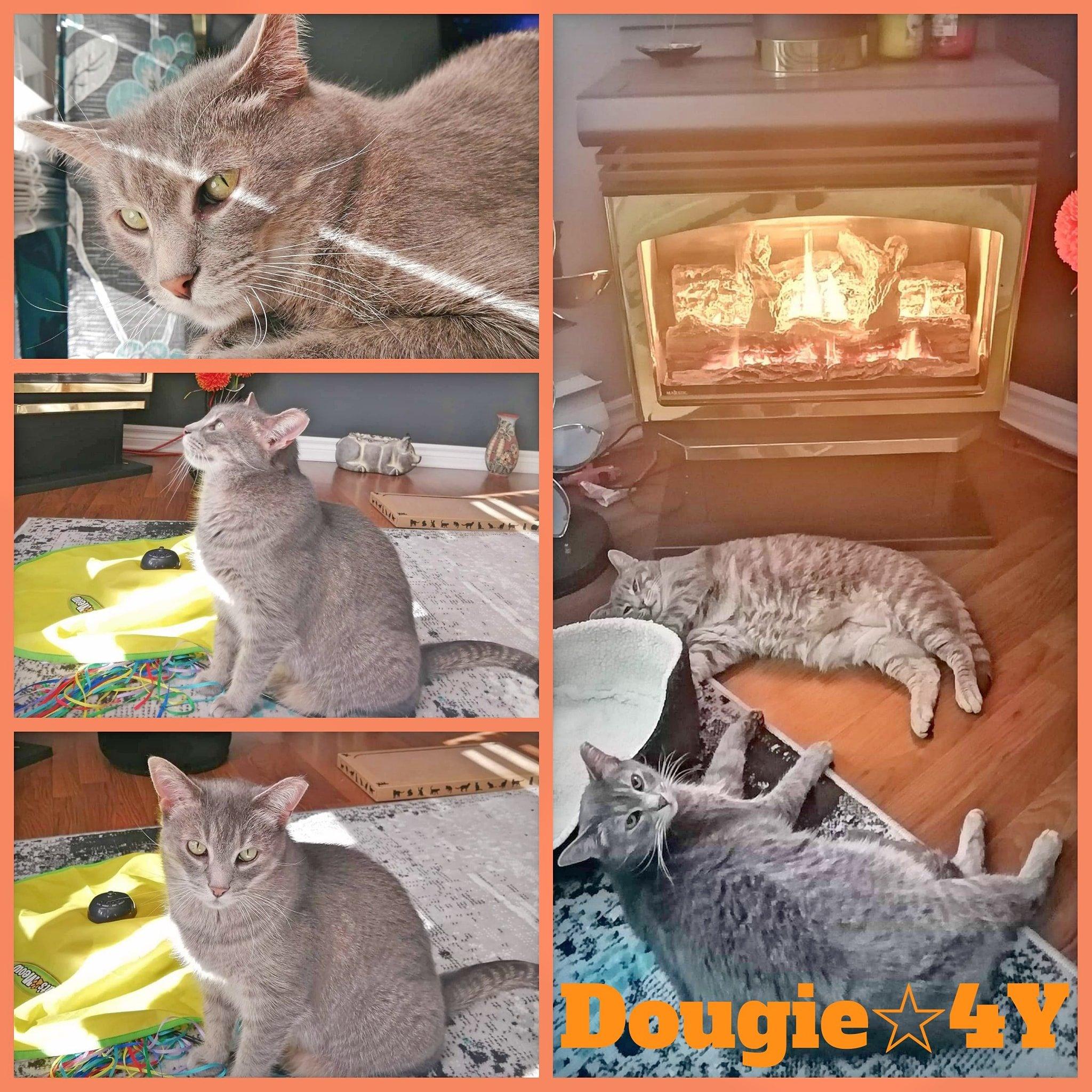 Dougie-Male-4 Years